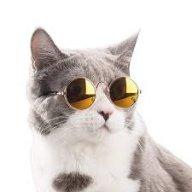 Intelligent_Cat
